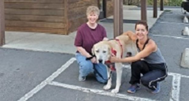 Image of Lucky the dog in front of the vet's office.