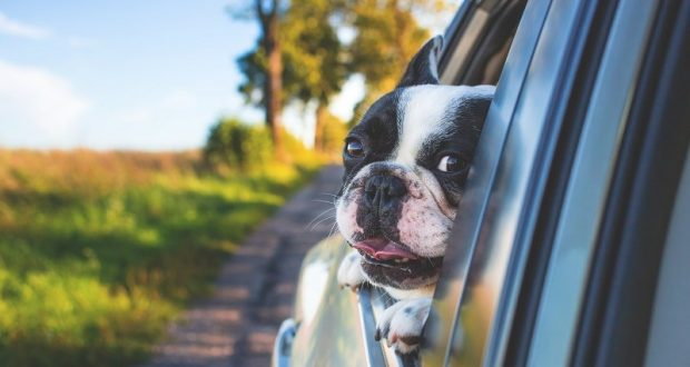 Image of a dog with his head the side window of a car.
