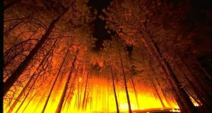 Image of a forest fire.