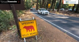 "Image of a ""Speeding Kills Bears"" sign in Yosemite."