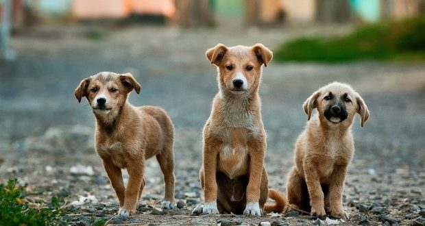 Image of three dogs looking at the camera.