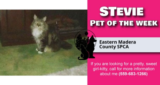 Image of Stevie the Cat.