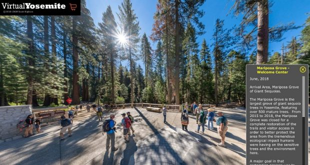 Image of a grove of trees in Yosemite.