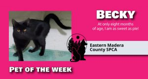 Image of Becky, pet of the week.
