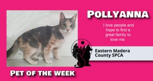 Image of Pollyanna, pet of the week.
