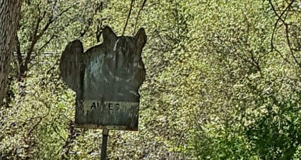 Image of an old sign in the woods.