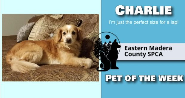 Image of pet of the week, Charlie the Dog.