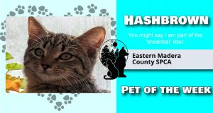 Image of Hashbrown, pet of the week.