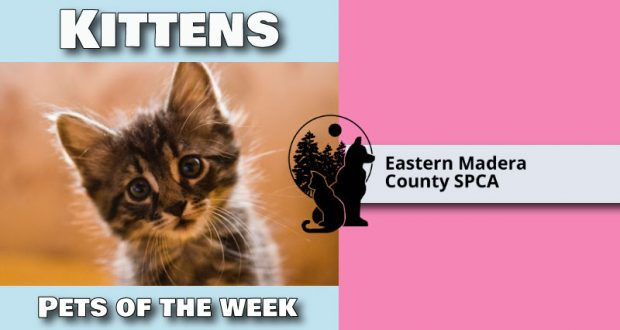 Image of Pet of the Week ad.