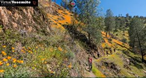 Image of wildflowers on the Hite Cove Trail.