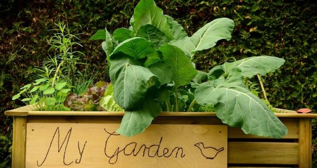 Image of a raised bed garden.