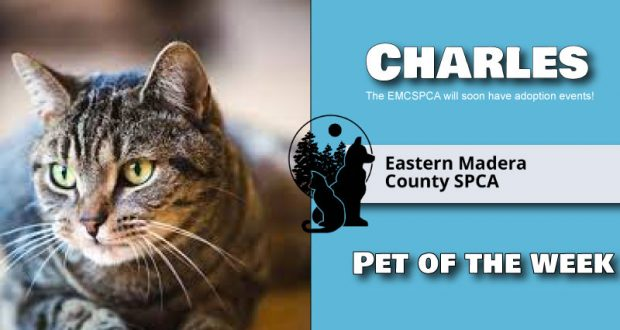 Image of pet of the week, Charles the cat.
