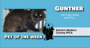 Image of Gunther the Cat.
