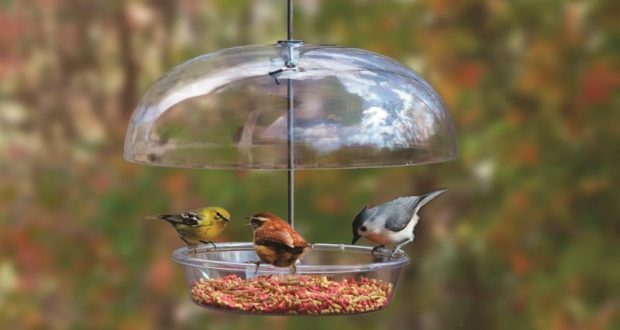 Image of a bird feeder with birds eating.
