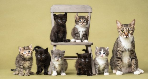 Image of a large group of cats.