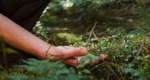 Image of a hand digging in the forest.