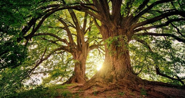 Image of trees with sunlight shining through.