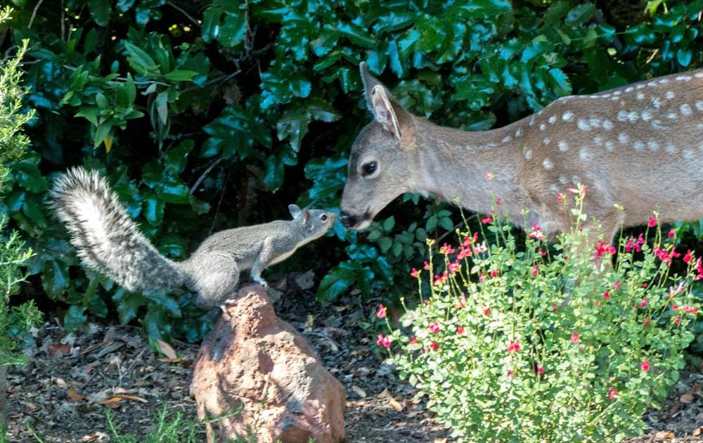 Deer and Squirrel 4 - photo by Keith Sauer