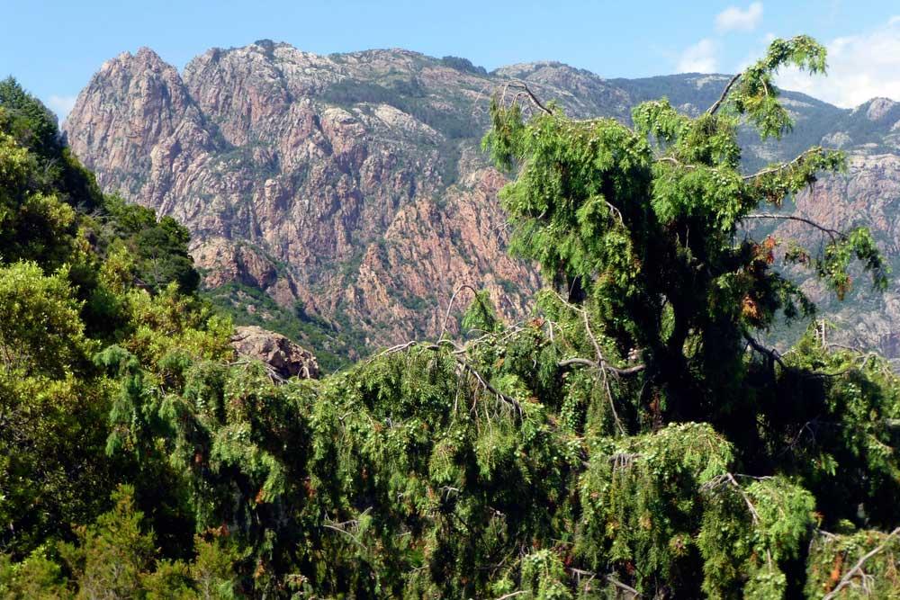 Porto Corsica13