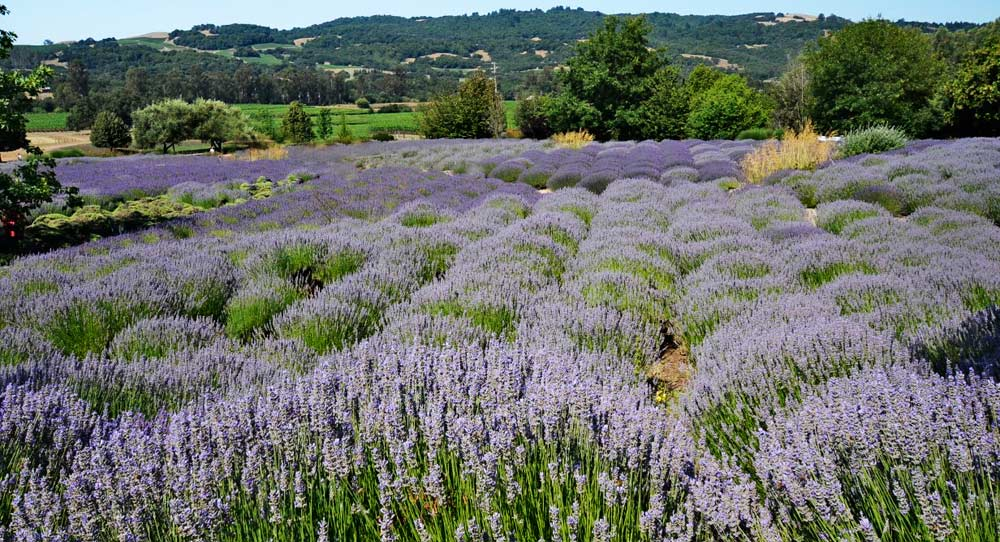 Provence or Sonoma Valley 2