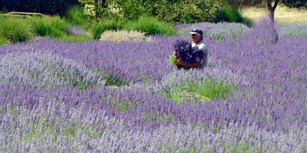 Provence or Sonoma Valley 3
