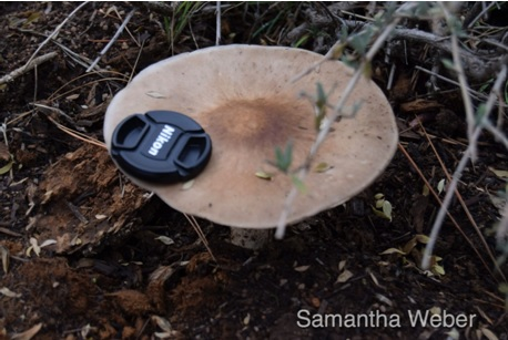 16 Blurry shot on same day with lens cap for scale - Big mushroom - photograph by Samantha Weber