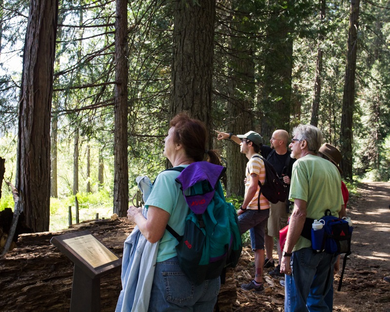 Redwoods 1 - Volunteers from the Yosemite Sierra Visitors Bureau take a guided tour in Yosemite with staff from The Redwoods 2014 - photo by Virginia Lazar