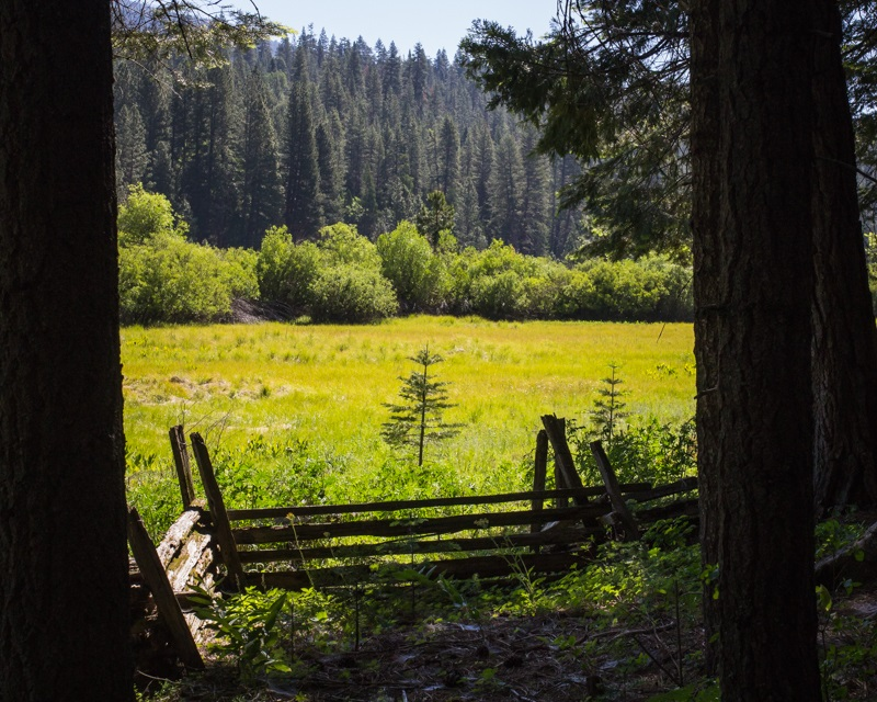 Redwoods 3 - View of pasture while on the Yosemite nature walk with staff from The Redwoods 2014 - photo by Virginia Lazar
