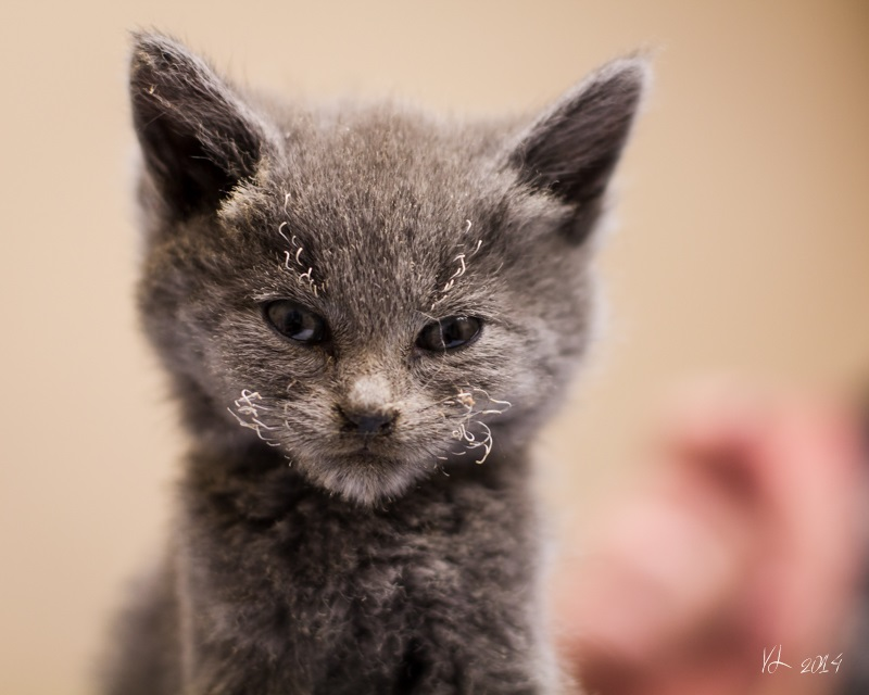 Courtney Fire - Charlotte poses - the littlest survivor at the vet - photo by Virginia Lazar Sept. 16 2014