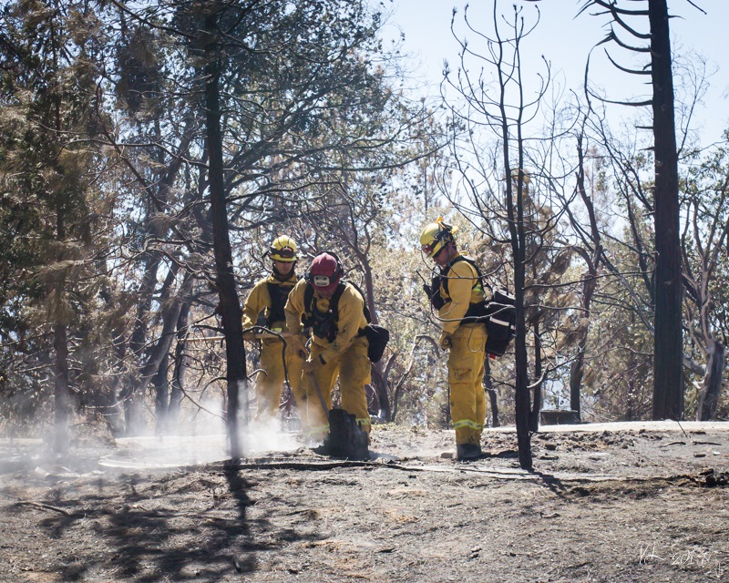 Courtney Fire - Firefighters work on a smoking tree stump where home has burned - photo by Virginia Lazar Sept. 16 2014
