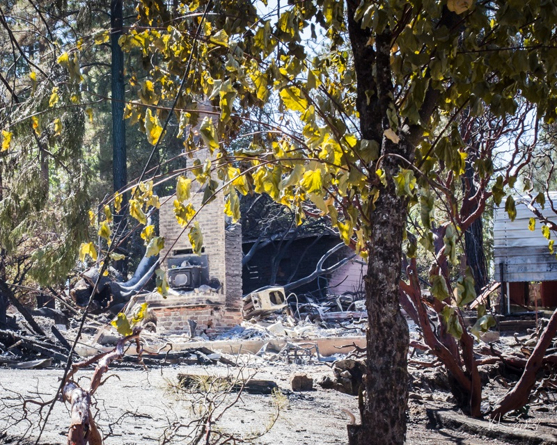 Courtney Fire - burned out area through trees - photo by Virginia Lazar Sept. 16 2014