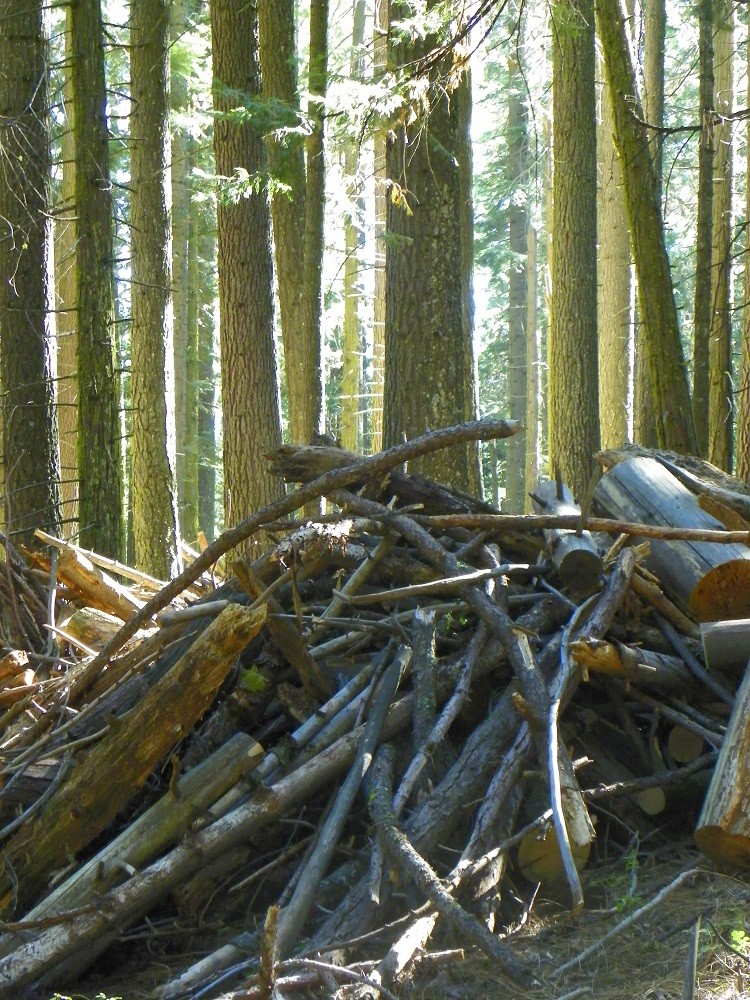 Burn piles gathered by the Forest Service in Nelder Grove - 2014 - photo by Kellie Flanagan
