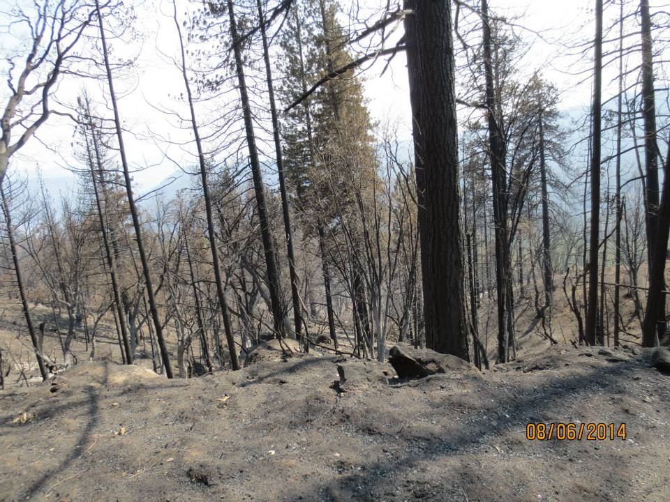 Mile High Vista After French Fire 2 - photo by Dirk Charley