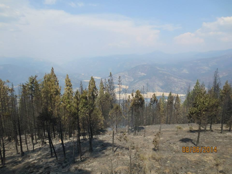 Mile High Vista After French Fire 6 - photo by Dirk Charley