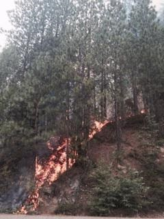 Flames on the French Fire - photo courtesy Madera County Sheriff