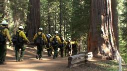 Firefighters entering Tuolumne Grove - photo from inciweb.org