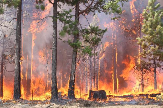South Flank Activity on Rim Fire - photo USFS Mike McMillan