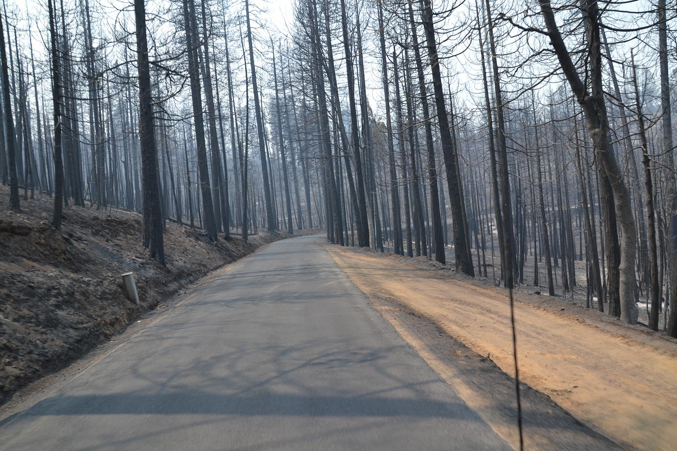 Bare trees on both sides of the road