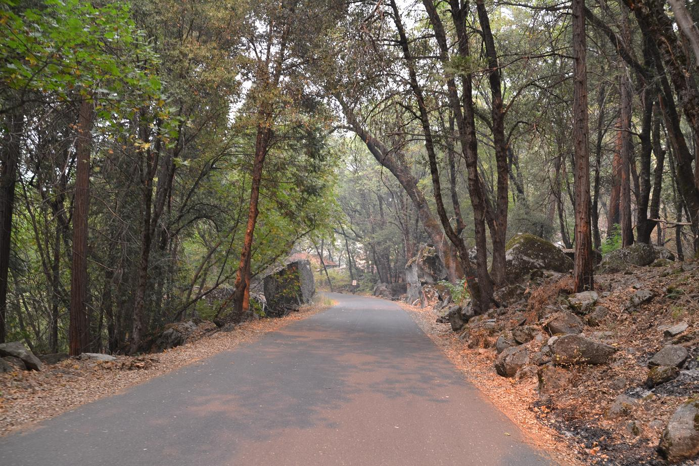 Forest canopy on Hetch Hetchy road - photo by Gina Clugston