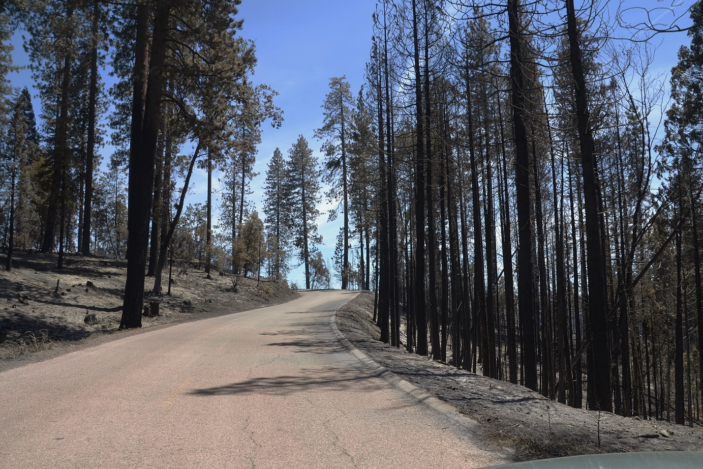 Burnt trees along the road - photo by Gina Clugston