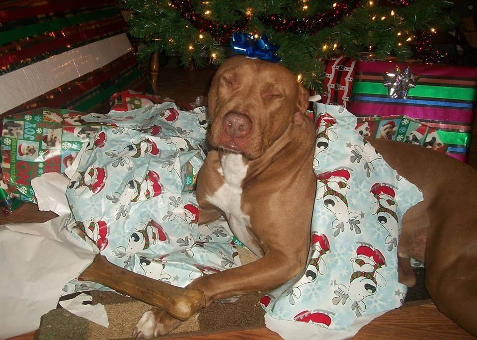 The folks at Steve's Tropical Fish and Pet Supply remind you to make sure every member of your family has something under the tree this year. https://www.facebook.com/stevestropicalfishandpet?fref=ts