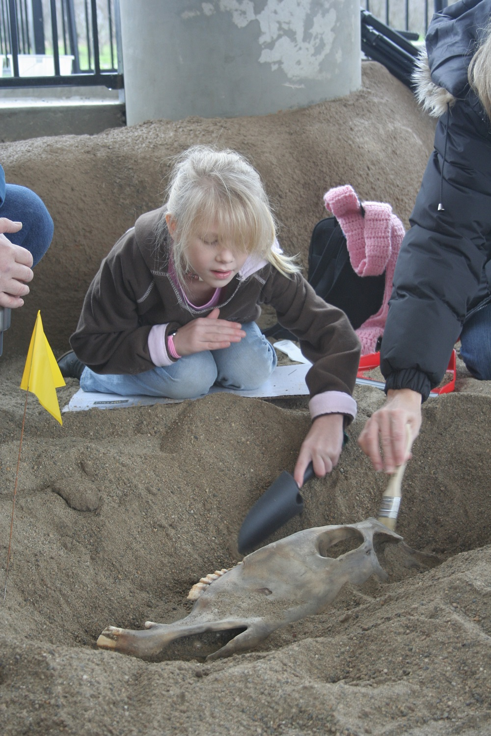 Girl in the Mock Dig where kids can uncover replica fossils of horses saber-tooth cats etc. courtesy FDC