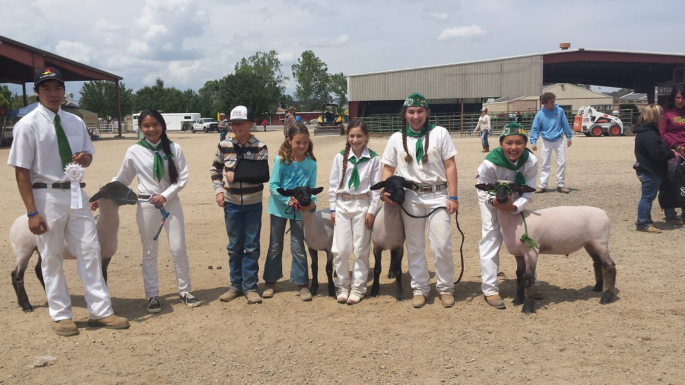 Coarsegold 4-H Sheep Project Chowchilla Fair Team. Photo by Karl Hussey