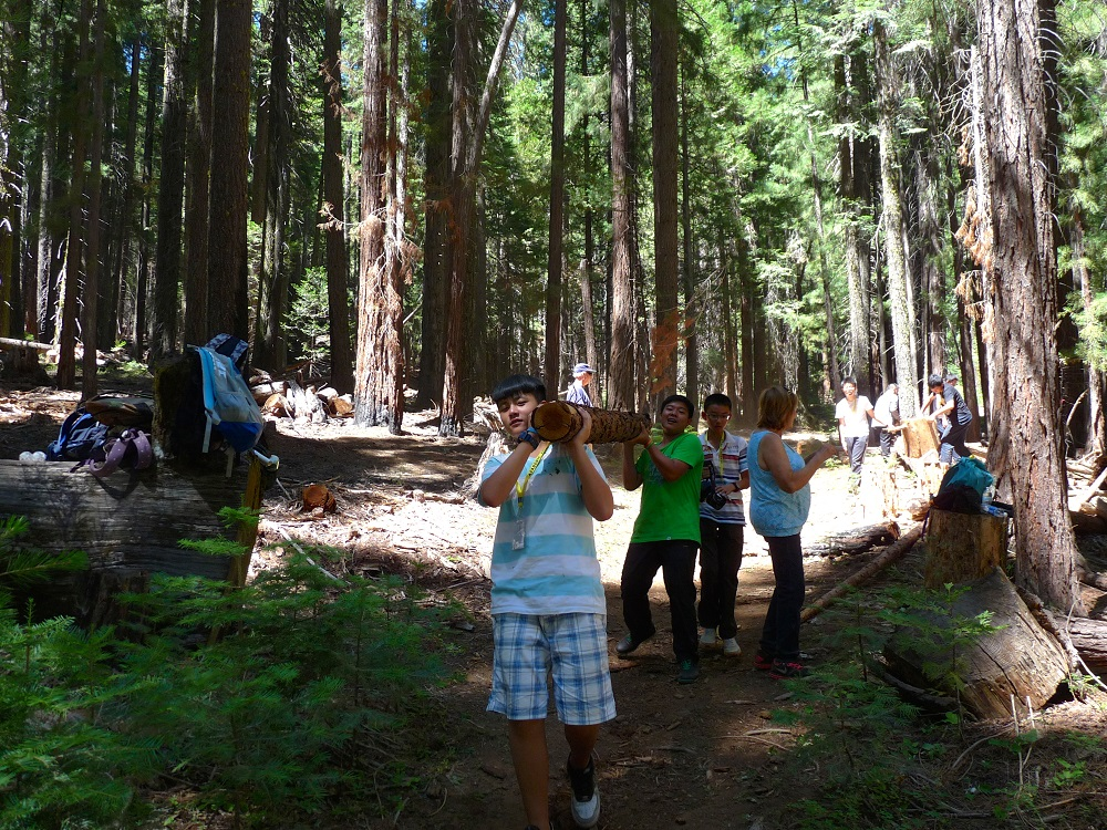 Sierra Homestay students from China visit Nelder Grove and help out by moving a trail - July 2014 - photo by Eric Hagen