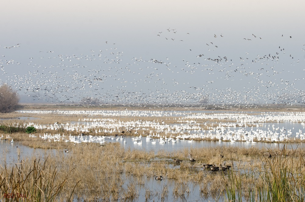 Merced National Wildlife Refuge photograph by Monique Wales 2015 SNO MNWR mwales 2015-15