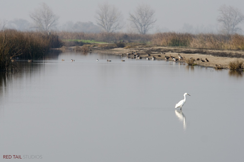 Merced National Wildlife Refuge photograph by Monique Wales 2015 SNO MNWR mwales 2015-6