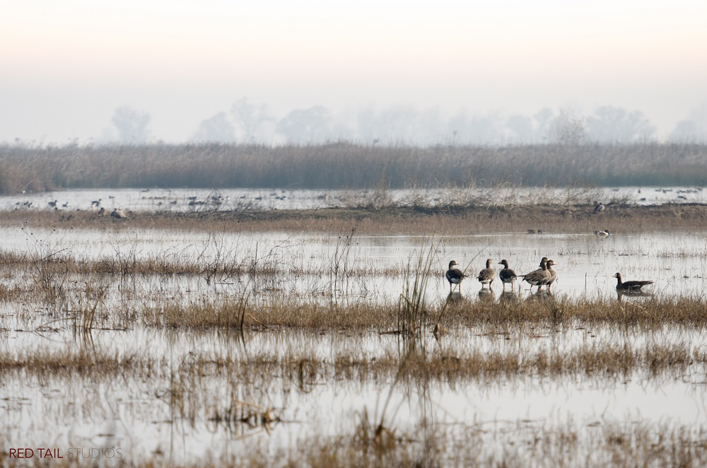 Merced National Wildlife Refuge photograph by Monique Wales 2015 SNO MNWR mwales 2015-7