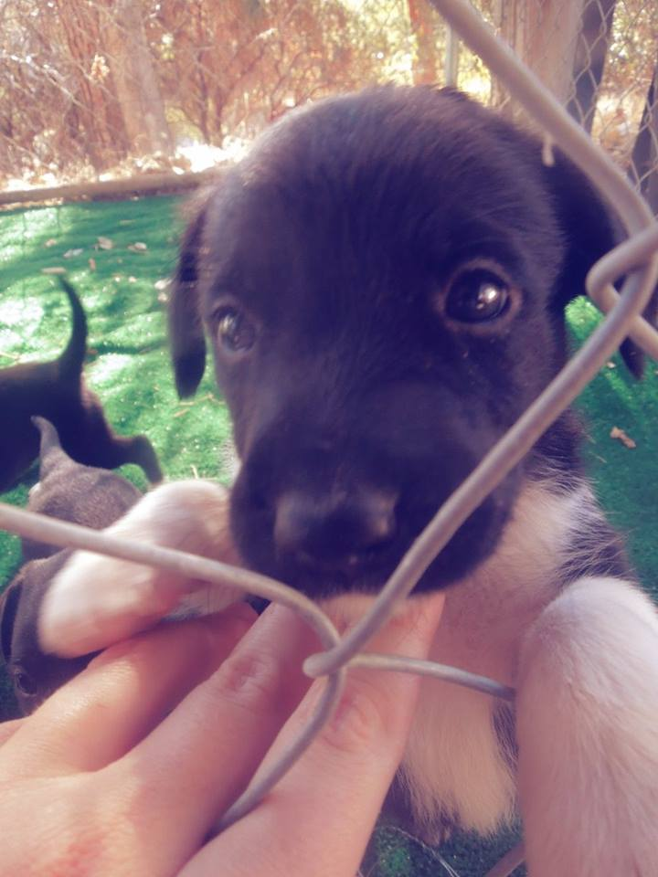 Coco leaves puppies behind