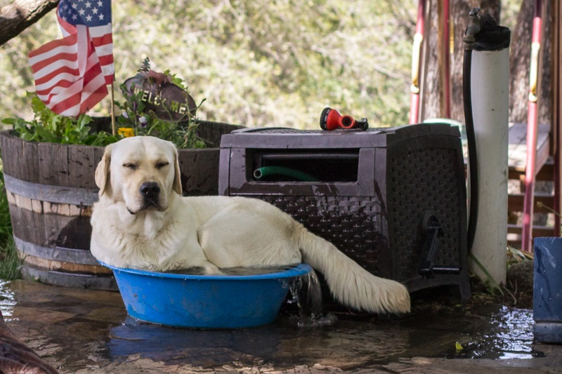 DADS Bailey is spoiled - photo by Virginia Lazar