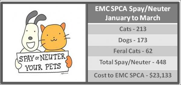 Spay and Neuter results Jan to Mar 2014